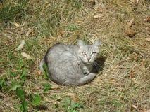 Ładny uliczny kot Obraz Stock