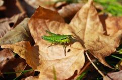 Ładny zielony insekt Obrazy Stock