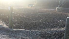 Ładny zimny ranek Obraz Royalty Free