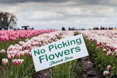 Żadny zrywanie kwiaty Obrazy Royalty Free