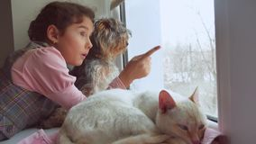 Ado et animaux familiers chat et chien de fille regardant la fenêtre, l'animal familier de chat dort Photos stock