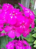 Adobe RGB Royaltyfri Foto