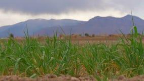 Adobe wioska w pustynnej części Iran zdjęcie wideo