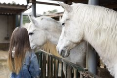 Adolescent from behind touching horses. Adolescent from behind touching horses in a shelter of Rojales, province of Alicante in Spain Royalty Free Stock Images
