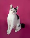 Adolescente blanco del gatito con los puntos negros que se sientan en rosa Imágenes de archivo libres de regalías