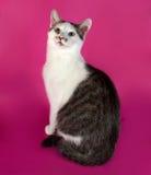 Adolescente blanco del gatito con los puntos negros que se sientan en rosa Fotos de archivo libres de regalías