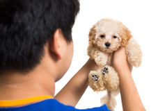 Adolescente che stringe a sé un cucciolo sveglio del barboncino Fotografia Stock