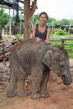 Adolescente con el elefante del bebé Imagenes de archivo