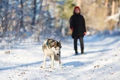 Adolescente con un perro fornido Fotos de archivo libres de regalías