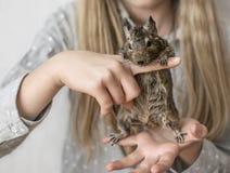 Adolescente de la chica joven que juega con la pequeña ardilla común animal del degu Retrato del primer del animal doméstico lind Fotografía de archivo