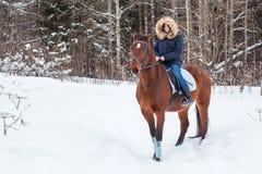 Adolescente de la muchacha y caballo grande en un invierno Imagen de archivo