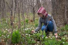 Adolescente del niño de la muchacha en el hallazgo y los cortes del bosque las primeras flores de snowdrops fotos de archivo