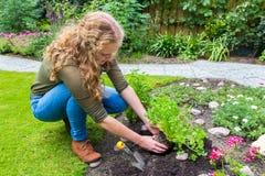 Adolescente holandés que planta el perejil en suelo del jardín Fotos de archivo libres de regalías