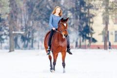 Adolescente joven con el caballo de bahía en parque del invierno Fotografía de archivo