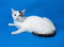 Adolescente manchado blanco del gato que miente en azul Fotos de archivo