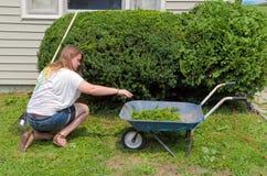 Adolescente que ayuda con los labores de jardinería Fotos de archivo