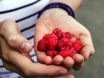 Adolescente que come la frambuesa en el jardín Imágenes de archivo libres de regalías