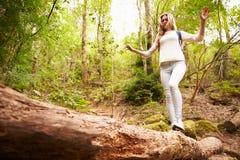 Adolescente que equilibra en un árbol caido en un bosque Foto de archivo libre de regalías
