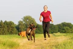 Adolescente que juega con los perros del boxeador Foto de archivo libre de regalías