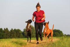 Adolescente que juega con los perros del boxeador Foto de archivo