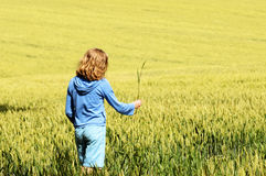 Adolescente que recorre a través de campo de trigo Imagen de archivo