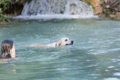 Adolescente que se baña en un lago con su perro Imagen de archivo libre de regalías