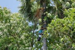 Adolescente que sube una palmera Imagen de archivo libre de regalías