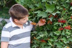 Adolescente sobre viburnum del arbusto Fotografía de archivo libre de regalías