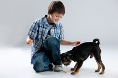 Adolescente y pequeño perro Imagen de archivo
