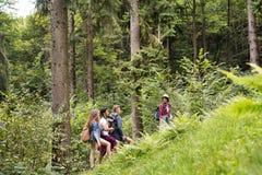 Adolescentes con las mochilas que caminan en vacaciones de verano del bosque Imagenes de archivo