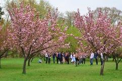 Adolescenti giapponesi del giardino pubblico dei ciliegi Fotografia Stock Libera da Diritti
