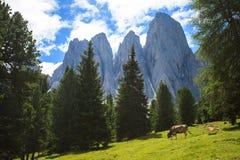 Adolf Munkel Trail in den Alpen Lizenzfreies Stockbild