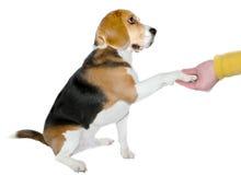 Adopción de un perro Fotos de archivo