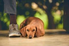 Adopción de un perro Imagen de archivo libre de regalías