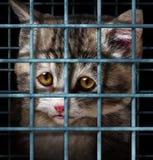 Adopción del animal doméstico Fotografía de archivo libre de regalías