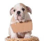 Adopción del animal doméstico Fotos de archivo