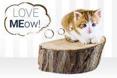 Adopción del gato de Kitty Fotos de archivo
