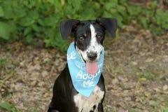 Adopción del perro Imagenes de archivo