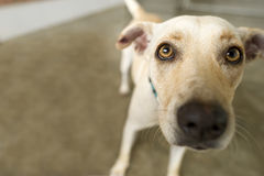 Adopción del perro del refugio Imagen de archivo