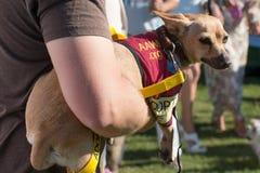 Adopción del rescate del perro de perrito Foto de archivo