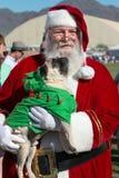 Adopción del rescate del perro de perrito Fotografía de archivo