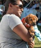 Adopción del rescate del perro de perrito Fotografía de archivo libre de regalías