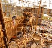 Adopciones del animal doméstico Perro sin hogar en perrera en el refugio para animales Fotos de archivo