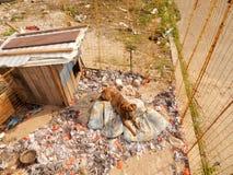 Adopciones del animal doméstico Perro sin hogar en perrera en el refugio para animales Imagen de archivo