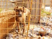 Adopciones del animal doméstico Perro sin hogar en perrera en el refugio para animales Foto de archivo