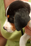 adopcja dostępna Fotografia Stock