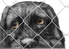 Adopt animal. Shelter for homeless dogs, waiting for a new owner vector illustration