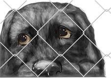 Adopt animal Royalty Free Stock Image