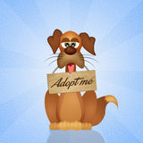 Adopt a dog. Funny illustration of adopt a dog Royalty Free Stock Photos