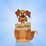 Adopt a dog Royalty Free Stock Photos